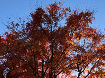 Autumn Colours: Pack of 30 Photos for use in the Classroom & your Teaching Resources
