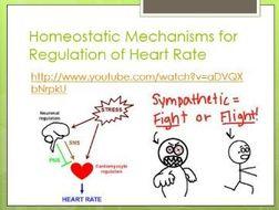 homeostasis health