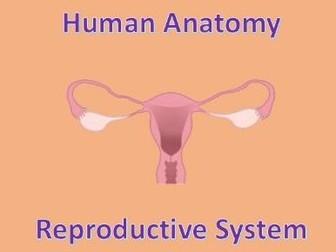 Human Anatomy Quiz: Reproductive System