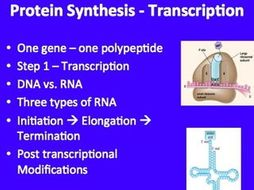 Transcription - DNA Replication - A Senior Biology PowerPoint Lesson & Notes