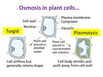 Osmosis - OCR AS/A Level Biology
