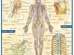 Lymphatic and Immune System Booklet