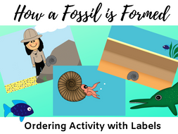 How a Fossil is Formed Printable Activity