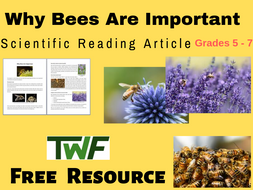 Why Bees Are Important Science Reading Article