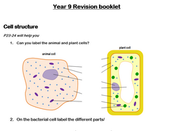 Cells and Organisation revision booklet