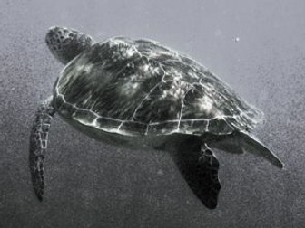 Turtle Photo Collection