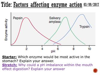 Factors affecting enzyme action - complete lesson (KS4)