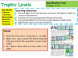new aqa gcse biology trophic levels lesson by chalky1234567
