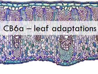 CB6a Edexcel 9-1: plant cell adaptations and function SOLO taxonomy