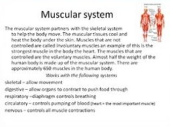 Systems of the human body.  Bundle