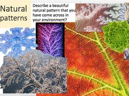 Oil pastel drawing of natural pattern using nature artist and looking at fractal patterns
