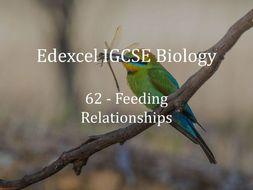 Edexcel IGCSE Biology Lecture 62 - Feeding Relationships