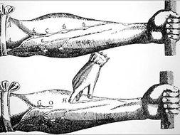 The Anatomists: Harvey and Vesalius