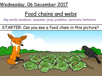 Year 7 Food Chains and Webs