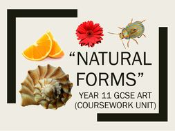 "GCSE Art Year 11 ""Natural Forms"" Unit Resources"
