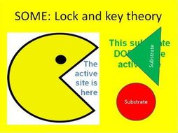 Gcse enzymes introduction including lock and key theory by gcse enzymes introduction including lock and key theory ccuart Choice Image