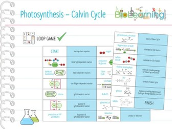 Photosynthesis: Calvin Cycle - Loop Game (KS5)