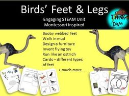 Birds' Feet and Legs, STEAM, Biomimicry - US