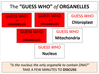 DNA in prokaryotes and eukaryotes (AQA A-level Biology)