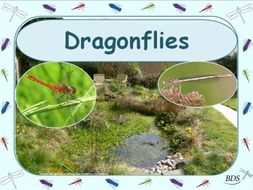 Dragonflies: Life-cycle, Ecology and Survival