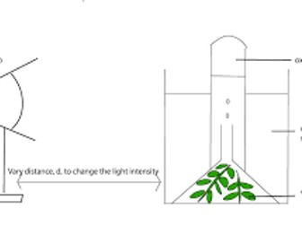 NEW AQA Biology GCSE Required Practical Revision 6- Photosynthesis