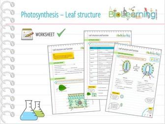 Photosynthesis leaf structure worksheet ks3ks4 by photosynthesis leaf structure worksheet ks3ks4 by anjacschmidt teaching resources tes ccuart Images