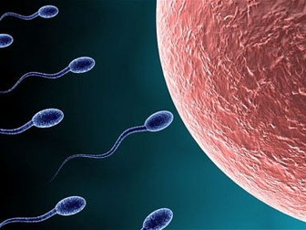 Cell specialism: sperm, egg and cilliated epithelial
