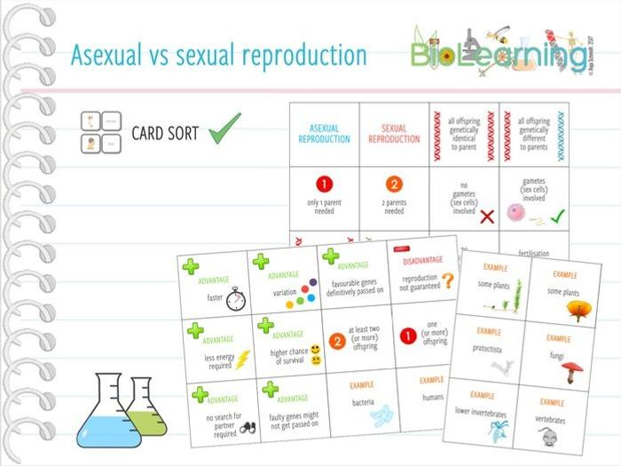 Asexual and sexual reproduction in plants ks2