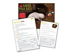 P7 Science Reading: naked mole rats