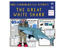 Great White Shark Non Chronological Report