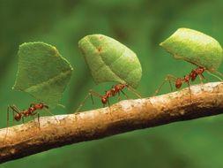 Invertebrate Classification - Arthropod  information slides