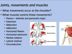 A-Level PE  Skeletal & Muscular Systems