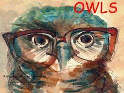 Owls Songs