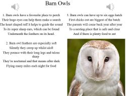 7.-Barn-Owls---vocal.mp3