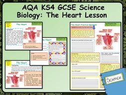 KS4 AQA GCSE Biology (Science) The Heart Lesson & Activities