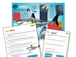 Year 4 sharks reading comprehension
