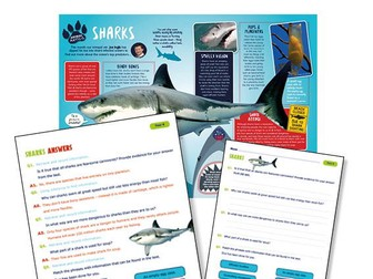 Year 4 Science Reading: sharks