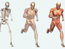 Cardiovascular system Unit 1 Anatomy and physiology