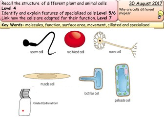 New AQA GCSE trilogy/biology- specialised cells