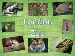 London Zoo - KS1/KS2 - medium term plan and topic title page