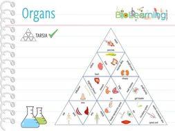 Organs - Tarsia (KS3)