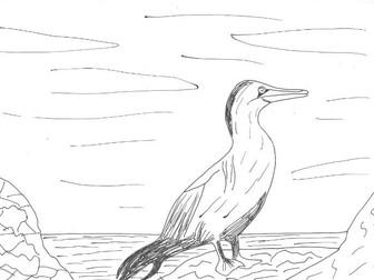 Adaptation:  Gannets