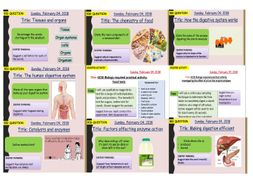 AQA new specification-B3 Organisation and the digestive system -Complete bundle