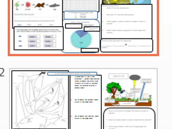 Food chains, food webs, carbon cycle, nitrogen cycle, ecology revision