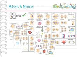 Mitosis & Meiosis - Bingo (KS4/5)