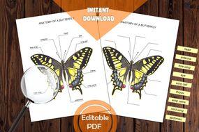 pdf_butterfly_edu.zip