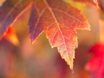 Autumn / Fall  Colour. Images for Inspiration