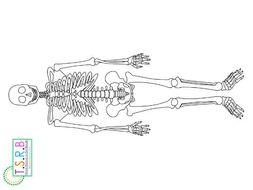 Life Size Skeleton Printable by TheScienceResourceBank