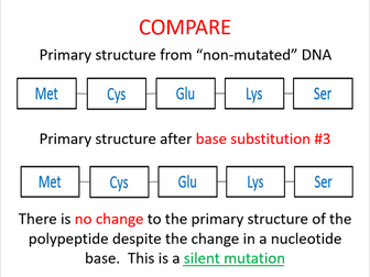Gene mutations (AQA A-level Biology TOPIC 4)