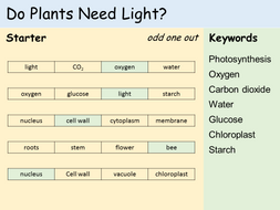 KS3 Plants - Lesson 7 - Do Plants Need Light? (Testing for Starch)